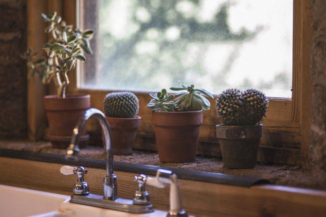 Träfönster i köket. Ovanför diskhon står suckulenter och kaktusar i krukor.
